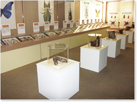 生き虫と標本の展示