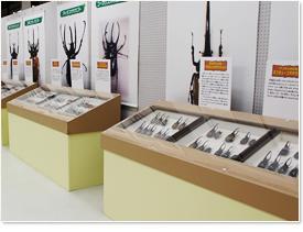 標本の展示