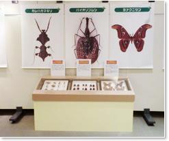 昆虫タペストリー