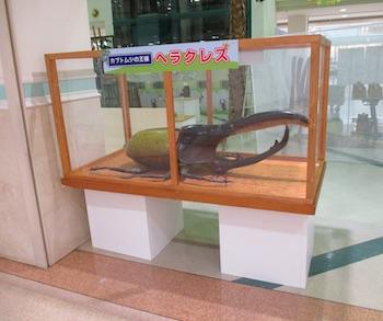 大型造形昆虫展示コーナー